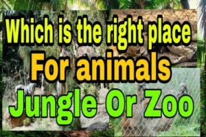 Jungle or Zoo - Which is the right place for animals?